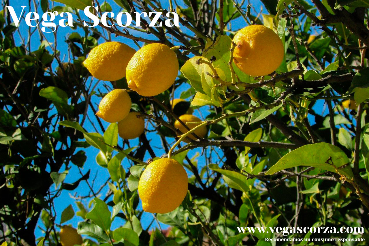 Vega Scorza: Myths and truths about alcoholic beverages